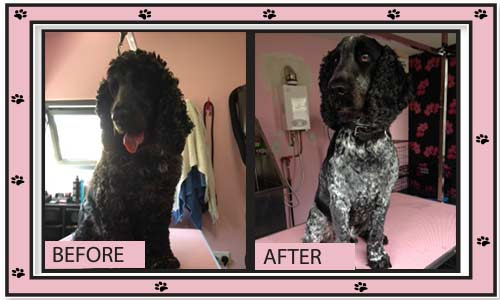 Coleen's Pet Salon - Dog Grooming Kilcock, Dog Grooming Straffan, Dog Grooming Kildare, Dog Grooming Clane, Dog Grooming Maynooth, Dog Grooming Celbridge