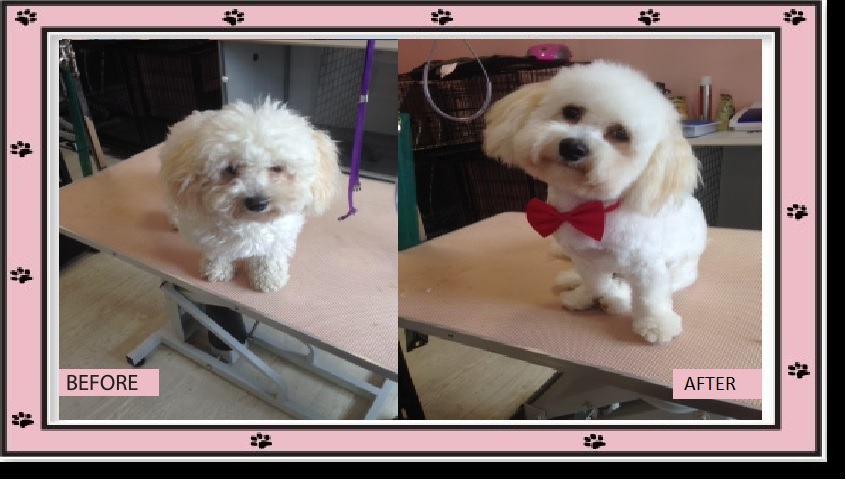 Coleen's Pet Salon - Dog Grooming Kilcock, Dog Grooming Kilcock, Dog Grooming Straffan, Dog Grooming Kildare, Dog Grooming Clane, Dog Grooming Maynooth, Dog Grooming Celbridge