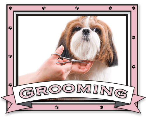 Coleen's Pet Salon - Dog Grooming Straffan, Dog Grooming Kildare, Dog Grooming Clane, Dog Grooming Maynooth, Dog Grooming Celbridge, Dog Grooming Kilcock