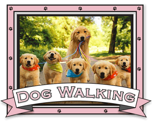 Coleen's Pet Salon - Dog Walking Straffan, Dog Walking services Kildare, Dog Walking Clane, Dog Walking Maynooth, Dog Walking Celbridge, Dog Grooming Kilcock