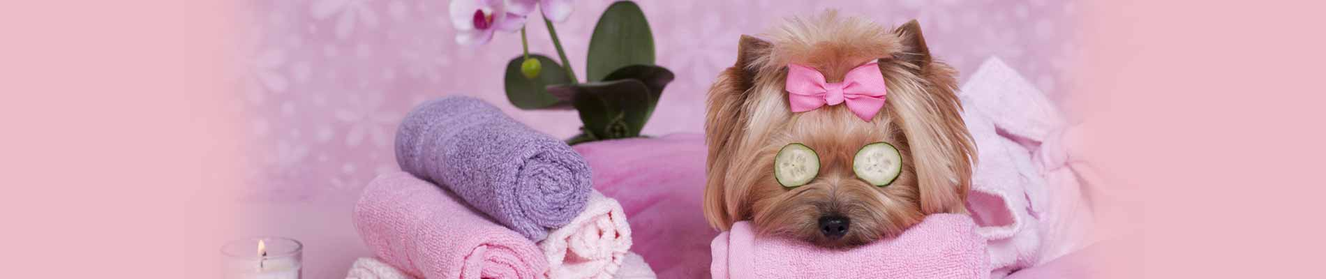 Coleen's Pet Salon - Dog Grooming Kildare , Dog Grooming Straffan, Dog Grooming Clane, Dog Grooming Maynooth - Home Slider 1