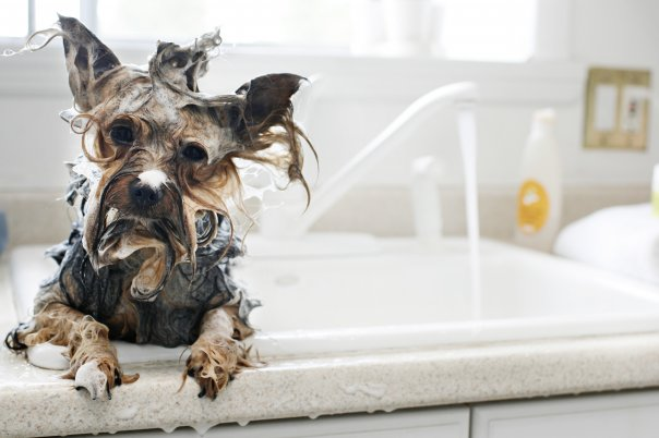 Dog Shampoos - Coleens Pet Salon, Straffan, Co. Kildare